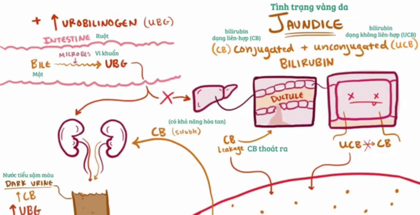 Những nguyên nhân triệu chứng chuẩn đoán và cách điều trị bệnh viêm gan do virus